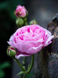 Flowers at the Sunken Garden - Kensington Palace, London