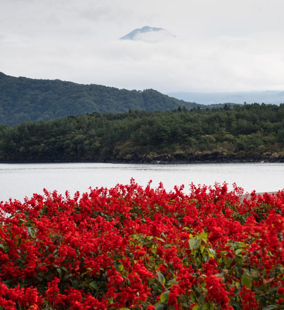 Озеро Сайко, Пять Озёр Фудзи