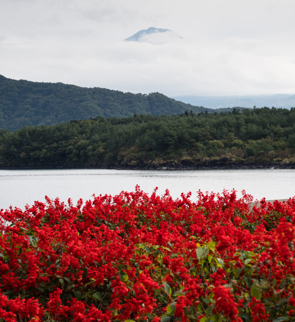 Lake Saiko, Fuji 5 lakes