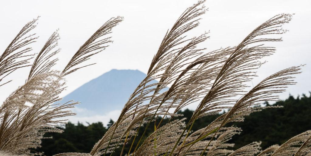Гора Фудзи рядом с озером Сёдзико (Пять Озёр Фудзи)