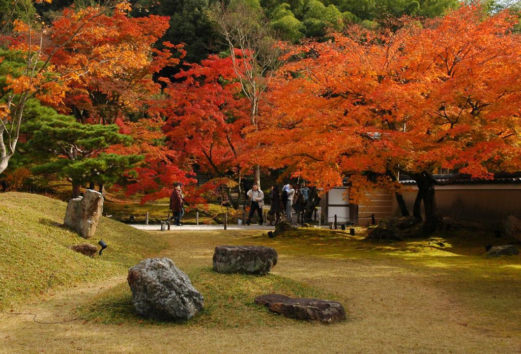 Kodaiji temple,Kyoto (fall foliage)