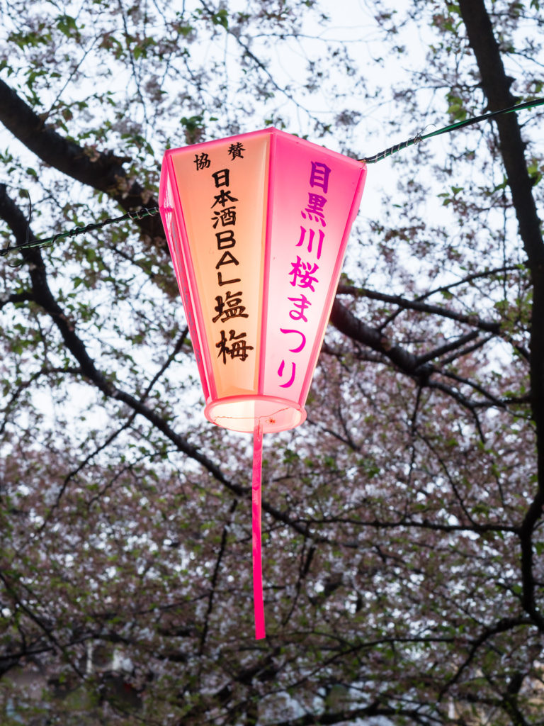 Cherry blossoms on Meguro river in Tokyo
