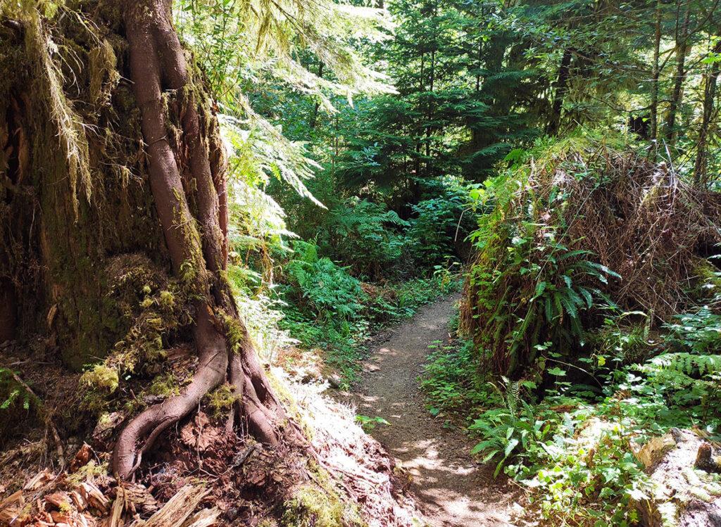 Gatton Creek Falls trail, Olympic peninsula, WA