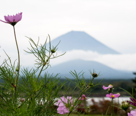 Mt Fuji near Lake Shojiko (Fuji 5 lakes)